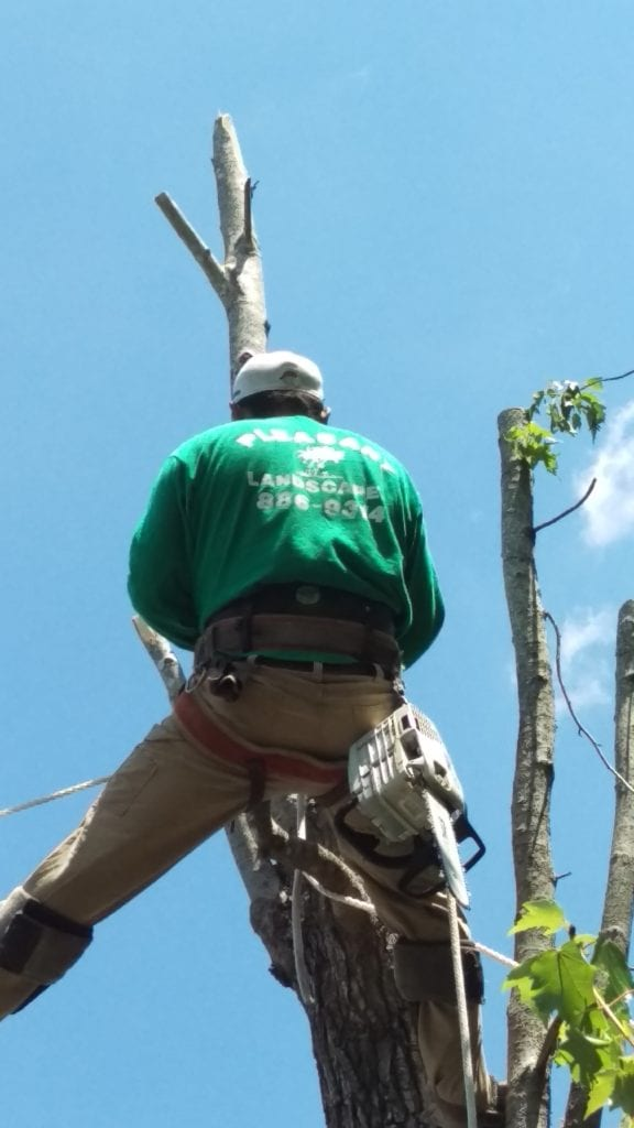 tree service in Mount Pleasant, SC